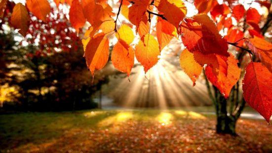 Őszi árhullás, kedvezményes őszi ajánlat!