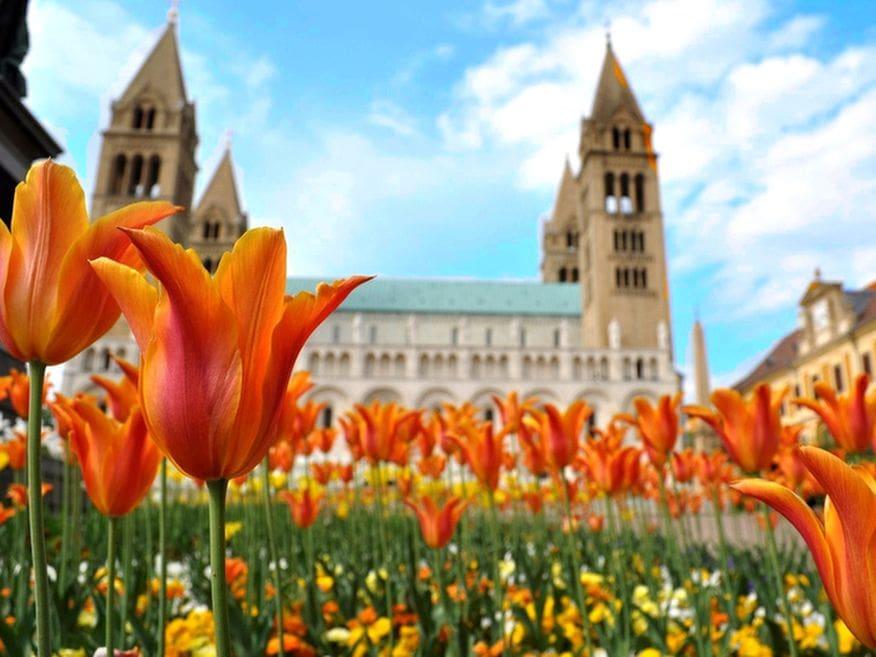 Hotelmakar Pecs Mediterran Tavasz 1