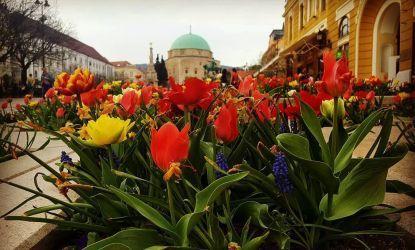 Ünnepi Hosszú Hétvégék (Május 1, Pünkösd)